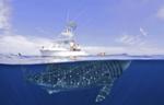 escualo ballena y bote