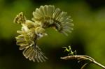 Ataque a la mantis